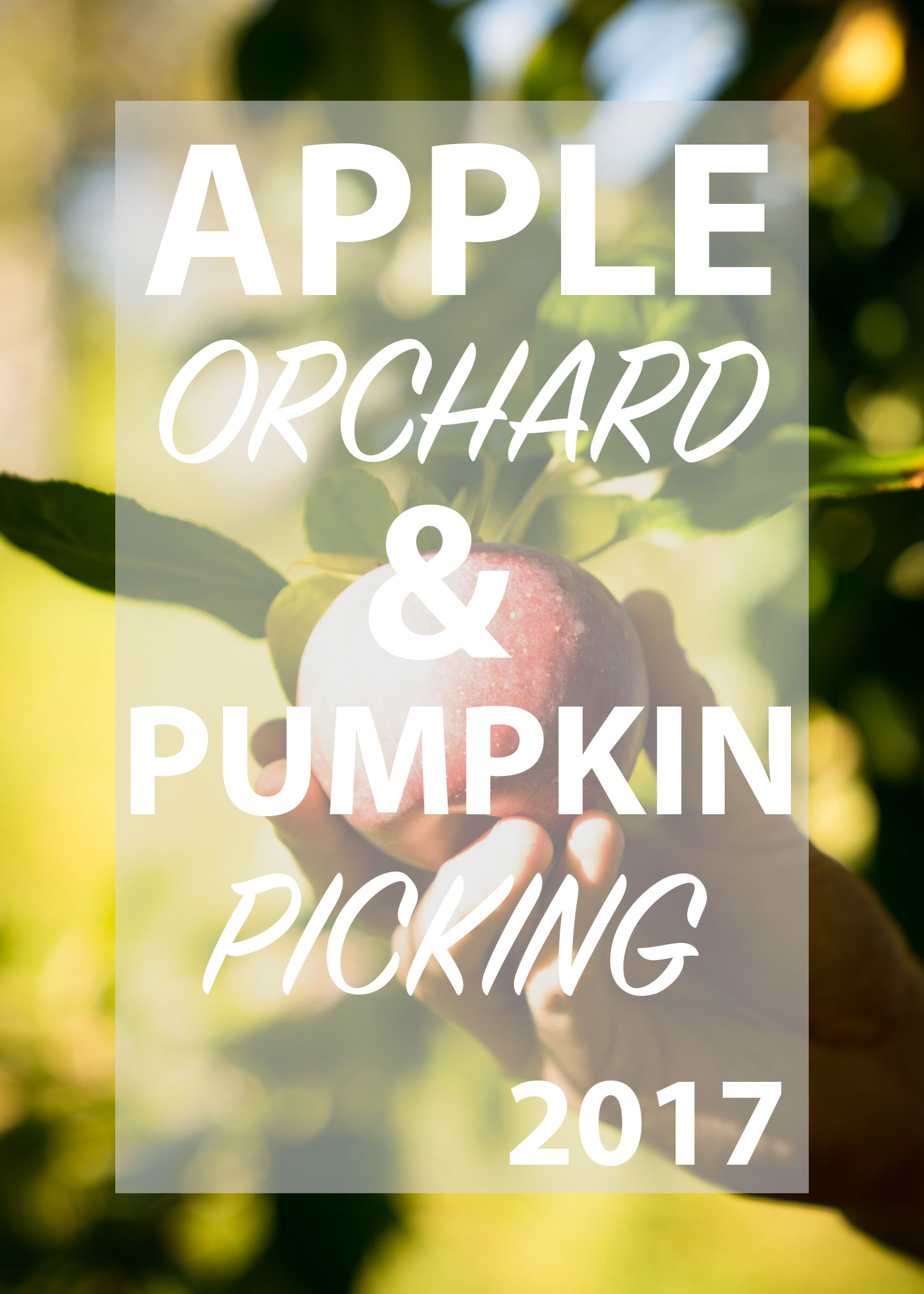 Apple Orchard & Pumpkin picking 2017